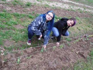 CASEE Juniors weeding their pea plot